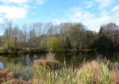 Un étang des Rouillons 1