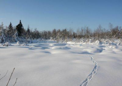 Tourbière des Grands Faings en hiver