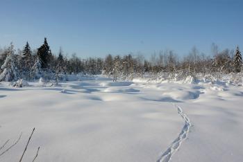 tourbiere-hivers