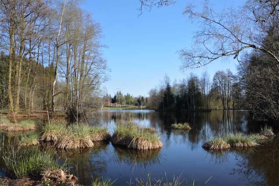 Un étang des Rouillons 3