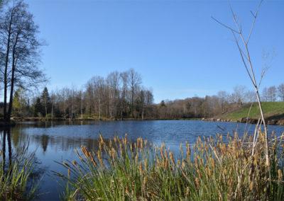 Un étang des Rouillons 4