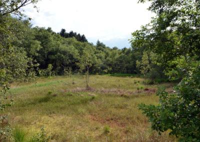 Tourbière du bois d'Annegray