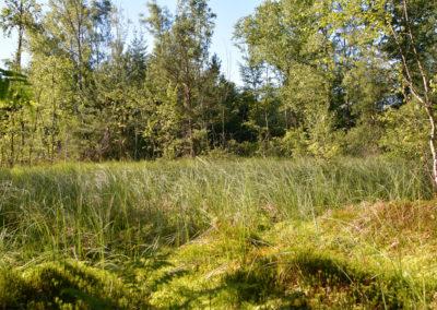 Tourbière près de l'étang d'épée